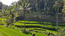 Private Tour: Ubud Highlights Including Monkey Forest and Tegalalang Rice Terrace, Ubud, Day Trips