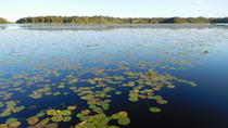 Noosa Everglades Eco Wilderness Cruise Including Lunch, Noosa & Sunshine Coast, Day Trips