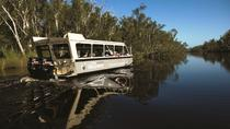 Noosa River and Everglades Afternoon Tea Cruise, Noosa & Sunshine Coast, Kayaking & Canoeing