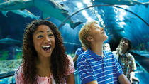 SeaWorld San Diego Day Tour from Anaheim, Anaheim & Buena Park, Theme Park Tickets & Tours