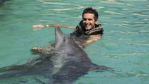 Ultimate Swim Dolphin Program in Ocho Rios, Ocho Rios, Swim with Dolphins