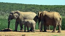 2Day OR 3Day Weekend Wildlife Safari Tour, Cape Town, Multi-day Tours
