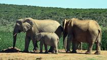3-Day Weekend Wildlife Safari Tour, Cape Town, Multi-day Tours