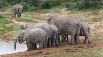 4 Day Cape to Addo Safari Tour, Cape Town, Multi-day Tours