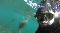 Seal Snorkeling, Cape Town, 4WD, ATV & Off-Road Tours