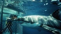 Shark Cage Diving Experience from Gansbaai, Hermanus, Shark Diving