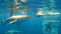 Shark Cage Diving from Gansbaai, Hermanus, Shark Diving