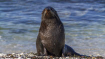 Small-Group Seal Colony and Wellington City Tour, Wellington, Half-day Tours