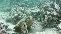 Guided Snorkel Tour, Oahu, Snorkeling