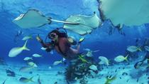 No Certification Required Guided Scuba Diving Tour, Oahu, Scuba Diving
