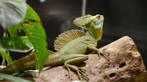 Canopy - Hanging Bridges - Insect Museum - Reptile and amphibian exhibition from Monteverde, ...