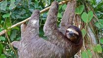 Sloth Adventure from Guanacaste, Liberia, 4WD, ATV & Off-Road Tours