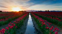 Skagit Valley Tulip Festival Day Trip from Seattle, シアトル