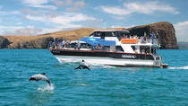 Akaroa Harbour Nature Cruise, Akaroa, Dolphin & Whale Watching