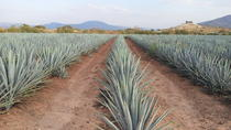 Day Trip to Tequila with Visit to Casa Sauza Distillery , Guadalajara, Cultural Tours