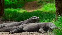 3-Day Komodo National Park Tour: Komodo Island and Rinca Island Trek, Bali
