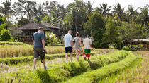 Rice Paddies Village Walking Tour, Tanjung Benoa, Cultural Tours