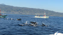 Small-Group Dolphin Watching, Waterfalls, and Ulan Danu Temple Tour from Bali, Bali, Dolphin & ...