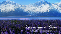 TURNAGAIN ARM SHUTTLE SERVICE: Your transport to Adventure, Anchorage, 4WD, ATV & Off-Road Tours