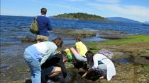 Vancouver Island Forest and Beach Nature Tour, Vancouver Island, Walking Tours