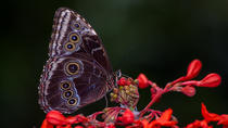 Butterfly Garden Tour in Monteverde, Monteverde, Nature & Wildlife