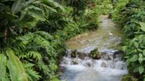 Botanical Garden and Plantation Tour- Ocho Rios only, Ocho Rios, Plantation Tours
