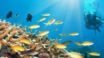 From Hurghada: 2-Hour Trip by Semi-Submarine, Hurghada, Submarine Tours