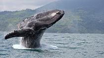 Juneau Shore Excursion: Whale-Watching Excursion, Juneau