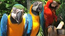 Jungle Island Miami, Miami, Attraction Tickets