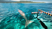 Dugong Observation Tour Alor, East Nusa Tenggara, Day Cruises