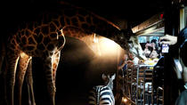 3-Hour Chiang Mai Night Safari, Chiang Mai, Night Tours