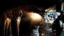 Chiang Mai Night Safari, Chiang Mai, Night Tours