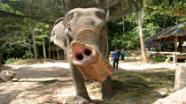 Koh Samui Island Safari and Elephant Ride, Koh Samui, Nature & Wildlife