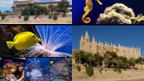 Palma Pass Family, Mallorca, Sightseeing & City Passes
