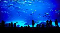 Sentosa S.E.A. Aquarium™ Admission in Singapore with Optional Hotel Transport, Singapore, null