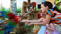 Singapore Jurong Bird Park Tour, Singapore, Attraction Tickets