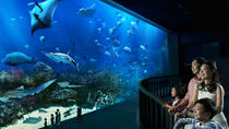Singapore Super Saver: Universal Studios and S.E.A. Aquarium with Optional Hotel Pickup