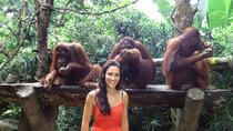 Singapore Zoo med transport og mulighet for frokost med orangutanger, Singapore, Nature & Wildlife