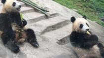 Kung Fu Panda 3 Temple Tour, Chengdu, Day Trips
