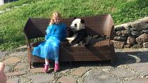 Private Day Trip including Panda Holding and Feeding at Dujiangyan Panda Center, Chengdu, Private ...