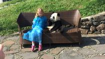 Private Day Trip to Dujiangyan Panda Center with Panda Holding Option, Chengdu, Private Day Trips