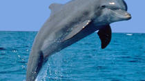 Dolphin Encounter & Benitiers Island, Port Louis, Day Trips