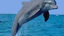 Dolphin Encounter & Bennitier Island, Port Louis, Day Trips