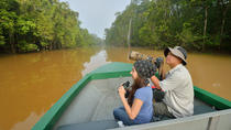 3-Day Tour from Sabah: Sandakan Sightseeing and Wildlife Experience in Sepilok and Selingan, Kota...