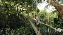 4-Day Taman Negara Adventure From Kuala Lumpur