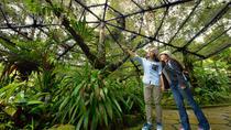 Kinabalu Park Canopy Walkway and Poring Hot Springs Full-Day Tour from Kota Kinabalu, Kota...