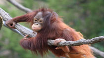 Matang Wildlife Rehabilitation Centre and Kubah National Park Tour from Kuching, Kuching, Bus & ...