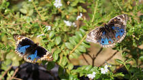 Private Tour: Discovery Tour of Entopia Butterfly Farm in Penang, Penang, null