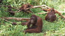 Private Tour: Orangutan Island and Mangrove Forest Day Trip from Penang, Penang, White Water ...