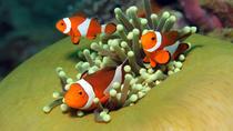 Pulau Payar Marine Park Snorkeling Tour from Langkawi, Langkawi, Day Cruises